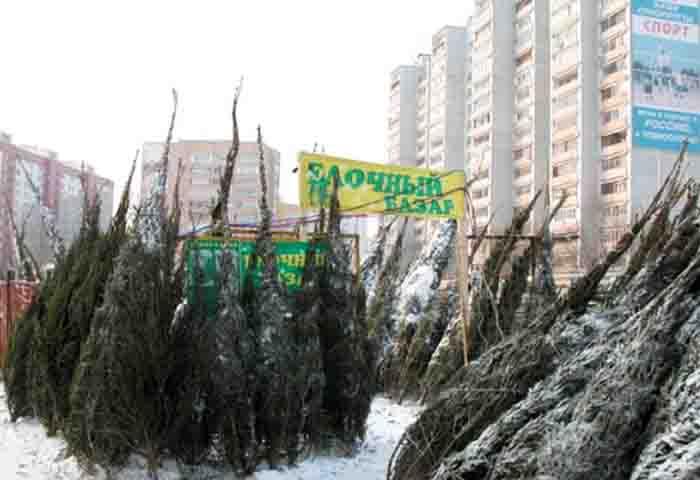 Елочные базары в Одинцовском районе