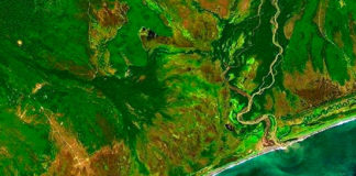 Экологическая катастрофа на побережье Камчатки